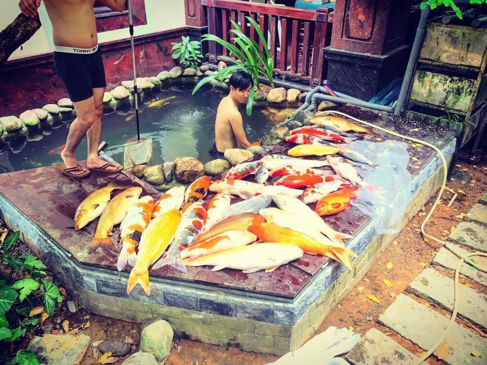 penyebab ikan koi mati