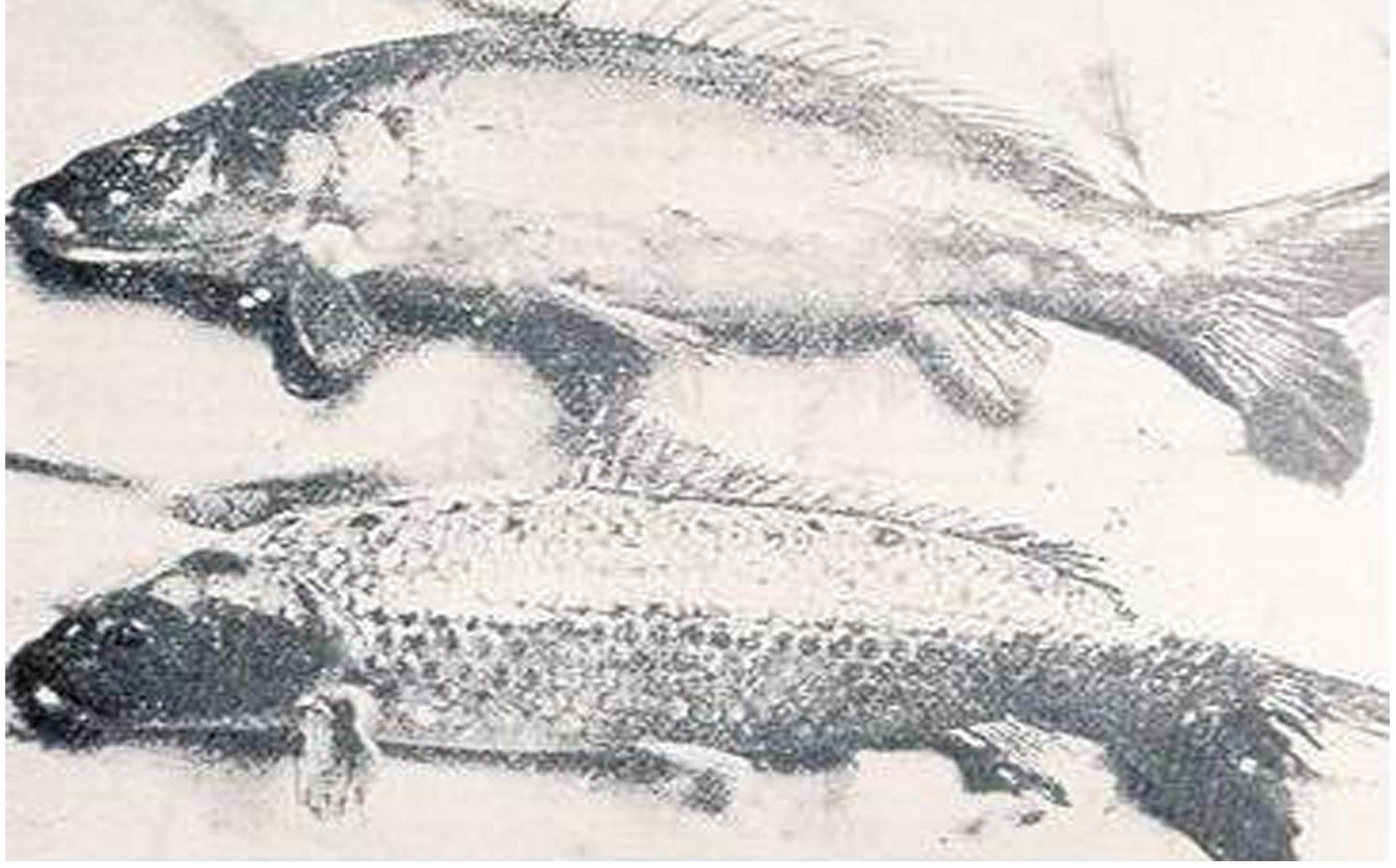 Sejarah Koi Tanpa Sisik – Doitsugoi