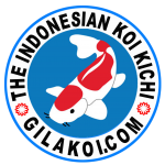 GILA KOI - The Indonesian Koikichi