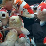 Ikan Koi - Sejarah dan Dongeng Dari Negeri Sakura