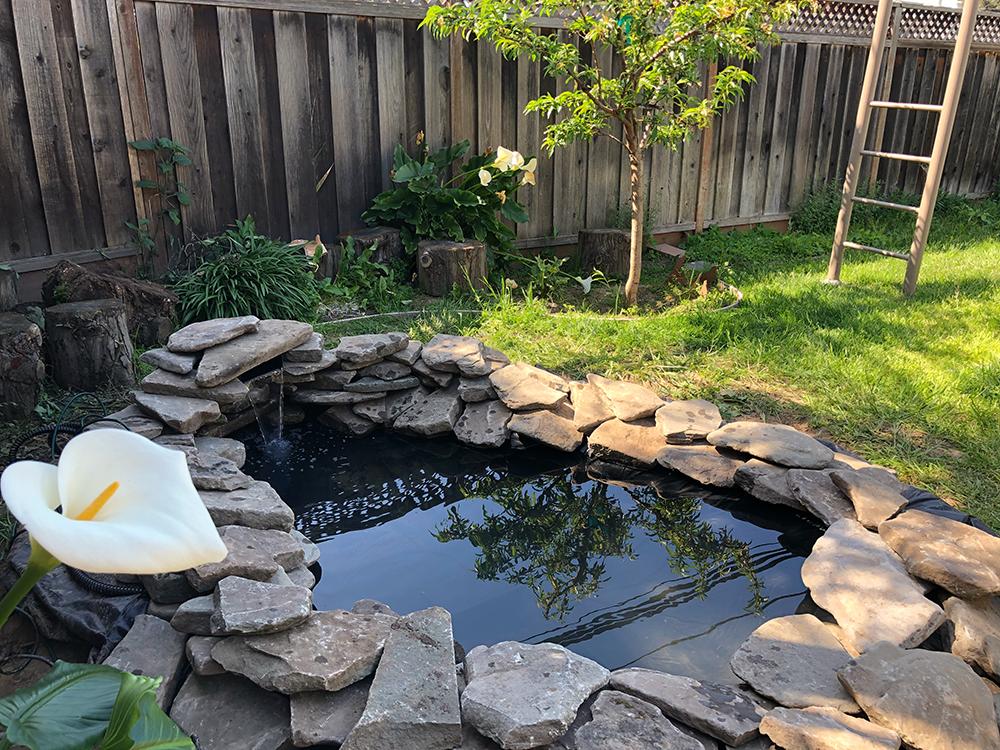 bikin kolam ikan